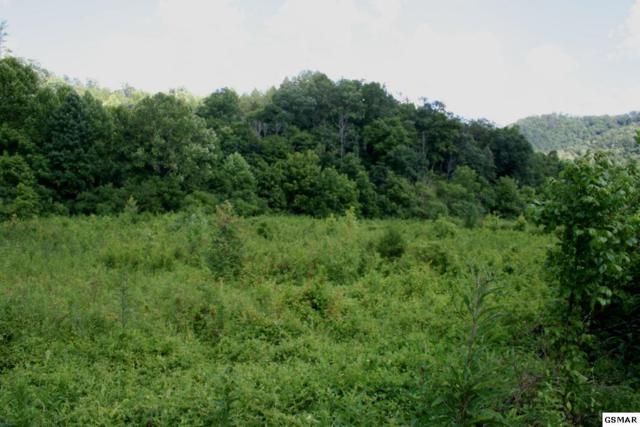 Bogard Rd, Cosby, TN 37722 (#217600) :: Prime Mountain Properties
