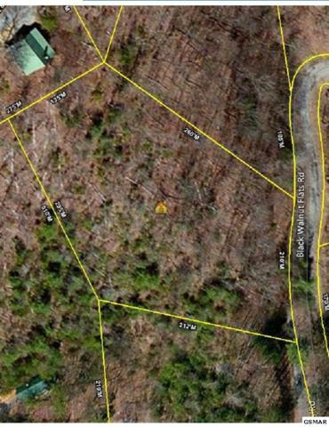 Lot Lot 3 Black Walnut Flats Rd, Sevierville, TN 37862 (#217994) :: Billy Houston Group