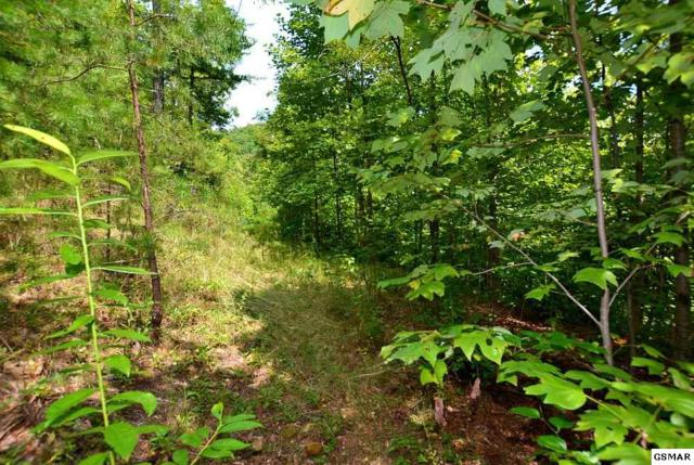 Lot 68 Big Bear Ridge Road, Gatlinburg, TN 37738 (#218297) :: The Terrell Team