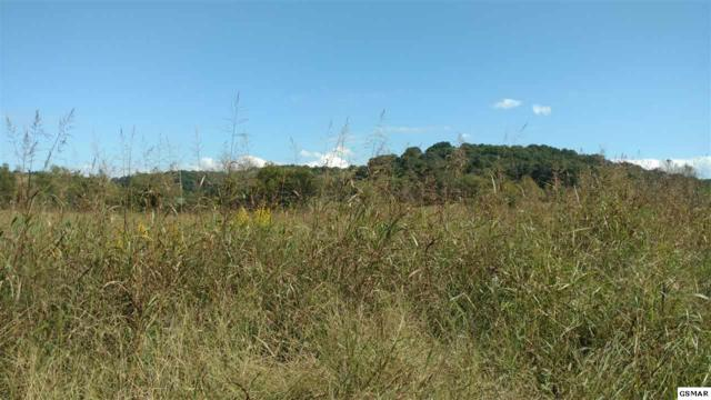 3.37 Acres Carty Court Lane, Newport, TN  (#219284) :: The Terrell Team