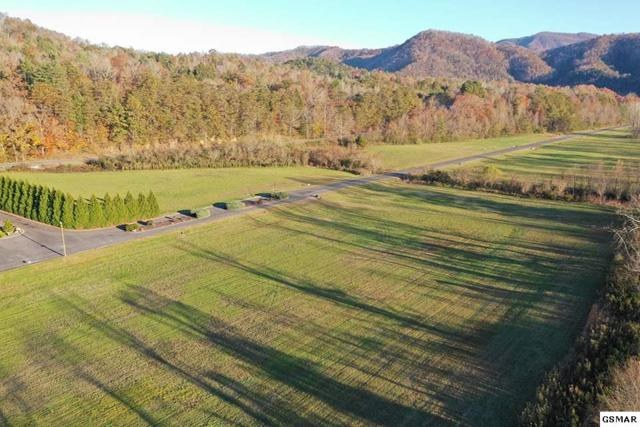 Lot 11 River Rapids Way, Del Rio, TN 37727 (#219567) :: The Terrell Team