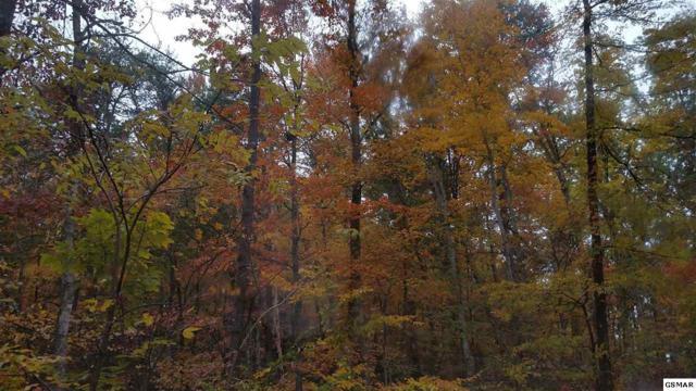 lot 11 Misty Hollow Way, Gatlinburg, TN 37738 (#219628) :: Four Seasons Realty, Inc