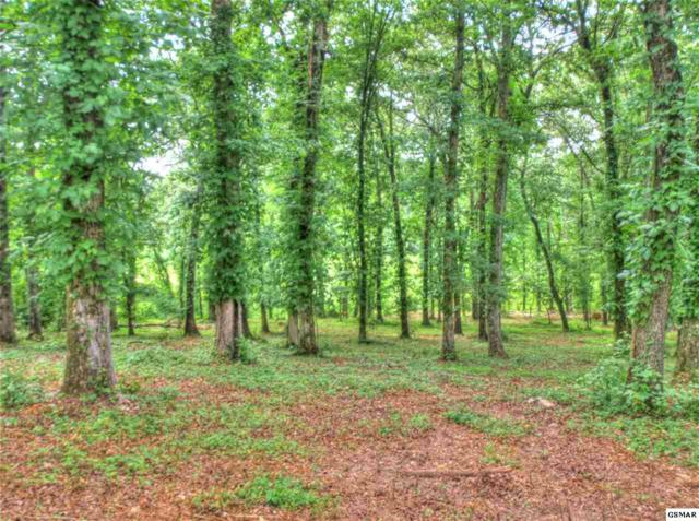 Lot 333 Water View Dr, Rockwood, TN 37854 (#220597) :: Billy Houston Group