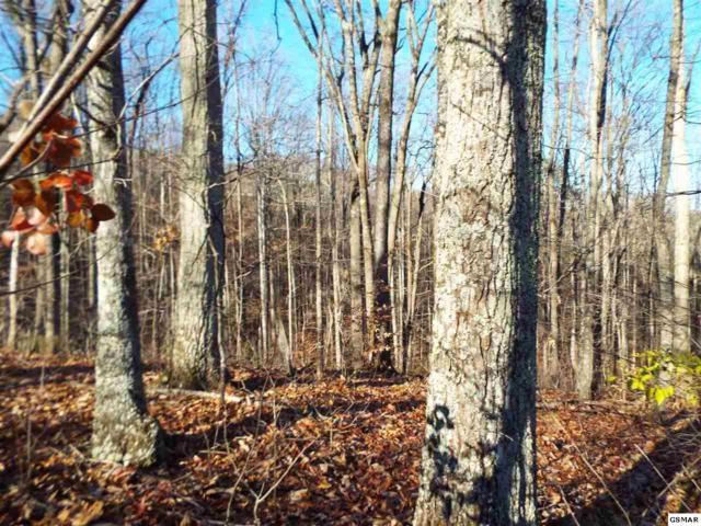 Lot 19 English Creek Rd, Newport, TN 37821 (#220782) :: Four Seasons Realty, Inc