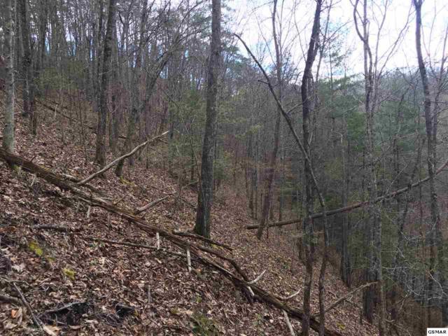 Lot 174 Black Bear Cub Way Lot 174, Sevierville, TN 37862 (#221725) :: Jason White Team | Century 21 Four Seasons
