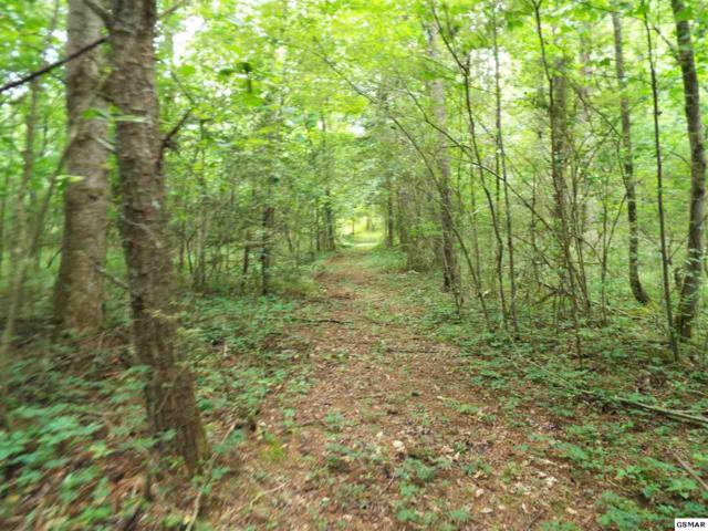 2426 & 2432 Dairy Road, Cosby, TN 37722 (#223137) :: Prime Mountain Properties