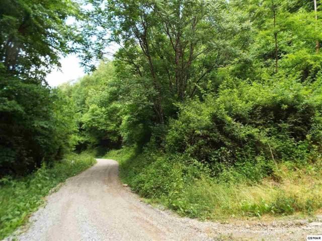 Parcel 033.01 Johns Creek Road, Del Rio, TN 37727 (#223351) :: Colonial Real Estate