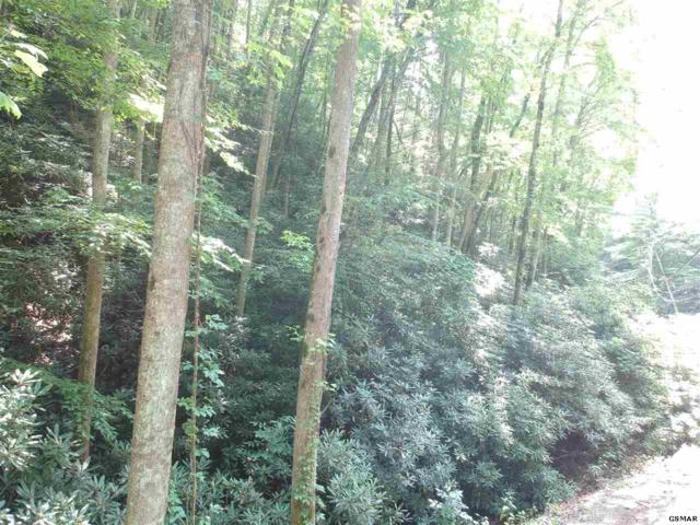 Lot 17 Butler Branch Rd, Gatlinburg, TN  (#223939) :: Prime Mountain Properties