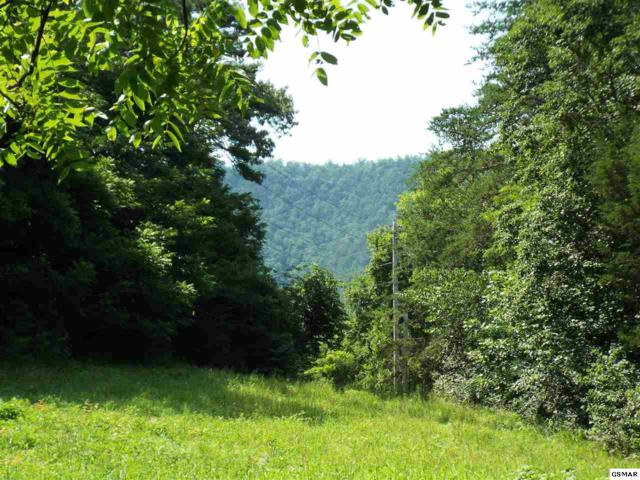 Parcel 004.01 English Mtn Road, Cosby, TN 37721 (#224044) :: The Terrell Team