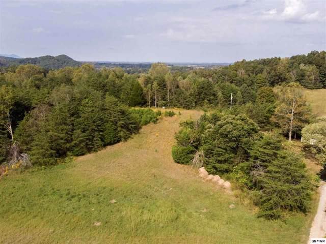 3310 Wild Turkey Way, Parrottsville, TN 37843 (#225006) :: The Terrell Team