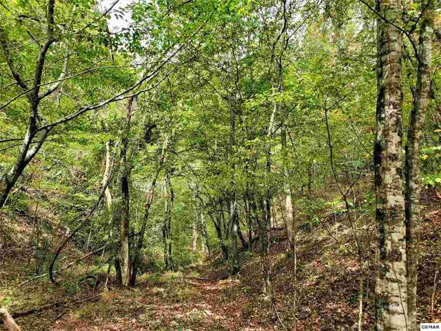 Lot 42 Shell Mountain Road, Sevierville, TN 37876 (#225229) :: Billy Houston Group