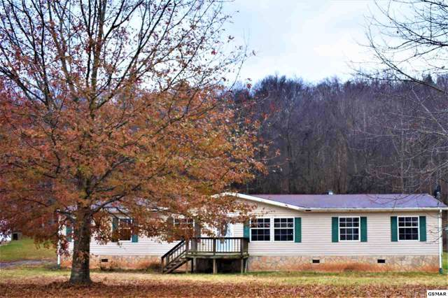 1452 River Chase Trail, Newport, TN 37821 (#226163) :: The Terrell Team