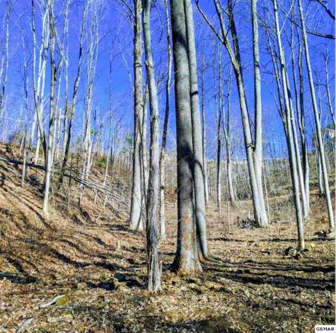Lot 21 Deer Path Ln, Gatlinburg, TN 37738 (#226537) :: Colonial Real Estate