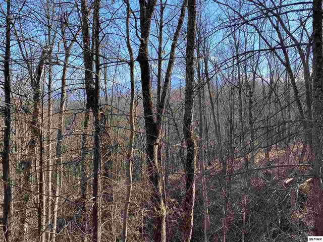 Lot Lot 177 Cliff Branch Road, Gatlinburg, TN 37738 (#226545) :: Jason White Team | Century 21 Four Seasons
