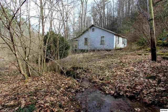 1 ACRE Reece Hollow Rd, Del Rio, TN 37727 (#226779) :: Billy Houston Group