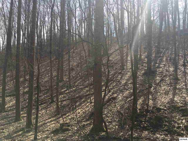 Lots 8,9,10 Laddiebuck Lane, Gatlinburg, TN 37738 (#227226) :: Four Seasons Realty, Inc