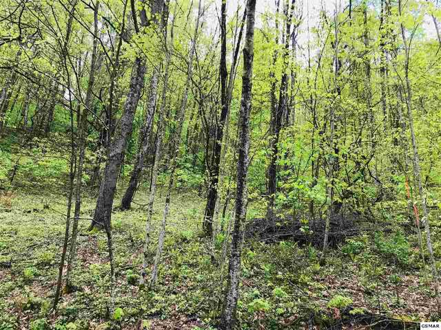 Lot 026 Wolf Way, Sevierville, TN 37862 (#227896) :: Four Seasons Realty, Inc