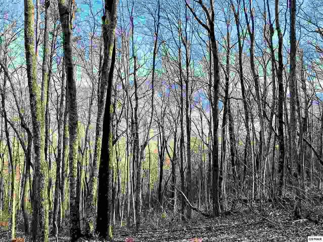 St. Moritz Drive Lot 17, Gatlinburg, TN 37738 (#227960) :: Four Seasons Realty, Inc