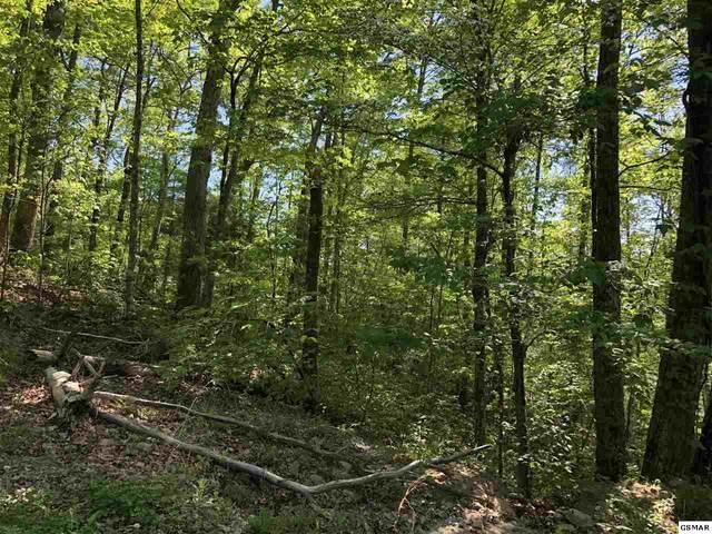 Lot 29 Black Oak Drive, Sevierville, TN 37876 (#228003) :: Jason White Team | Century 21 Four Seasons