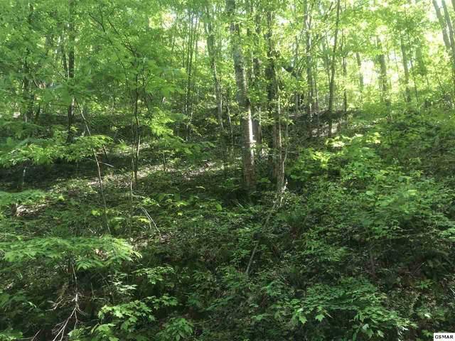 Lot 31 Black Walnut Flats Rd, Sevierville, TN 37862 (#228058) :: The Terrell Team