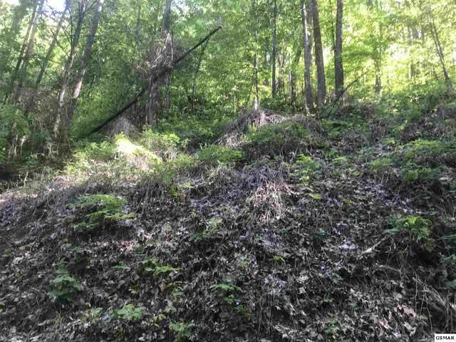 Lot 33 Black Walnut Flats Rd, Sevierville, TN 37862 (#228059) :: Billy Houston Group