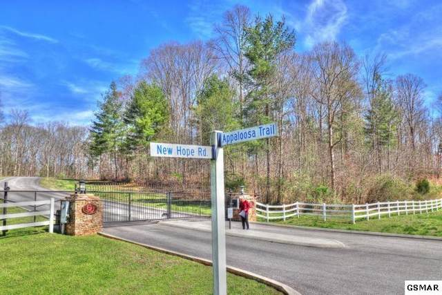 Lot 238 Appaloosa Trail, Rockwood, TN 37854 (#228084) :: Four Seasons Realty, Inc