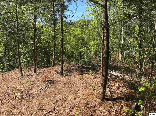 Lot 3 Sunshine Ridge Road, Cosby, TN 37722 (#228540) :: Tennessee Elite Realty