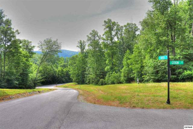 Lot 502 Silver Trail, New Tazewell, TN 37825 (#228586) :: Four Seasons Realty, Inc