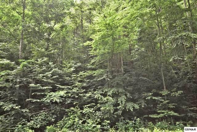 650 Glades Road, Gatlinburg, TN 37738 (#228864) :: Four Seasons Realty, Inc