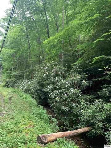 lot 17 Butler Branch, Gatlinburg, TN 37738 (#229282) :: Jason White Team | Century 21 Four Seasons