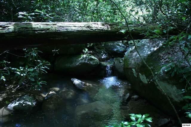 Bogard Creek Way Parcel ID/Tax I, Cosby, TN 37722 (#229349) :: The Terrell Team