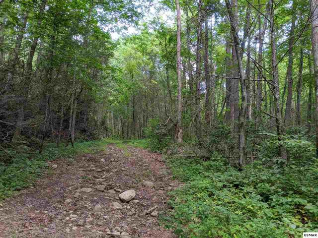 Leatherwood Dr Lot 39, Sevierville, TN 37862 (#230340) :: Colonial Real Estate