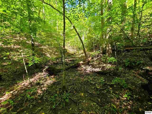 Jones Cove, Cosby, TN 37722 (#230609) :: Tennessee Elite Realty