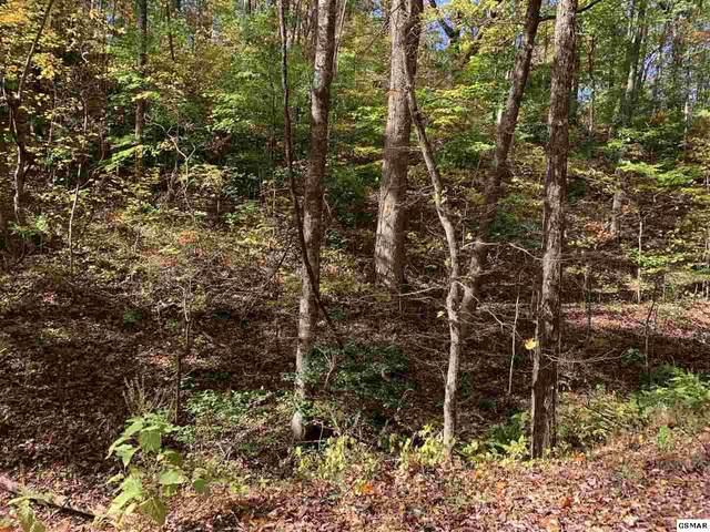 5 Acres Critter Way, Parrottsville, TN 37843 (#230939) :: Jason White Team   Century 21 Legacy