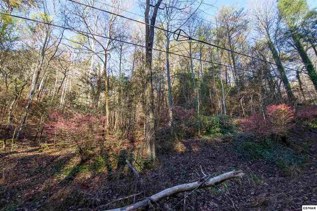 Black Gum Gap Road, Gatlinburg, TN 37738 (#231266) :: Billy Houston Group
