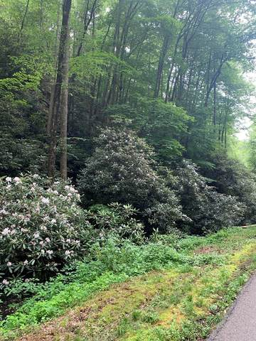Lot 14 Butler Branch Rd, Gatlinburg, TN 37738 (#240136) :: The Terrell Team