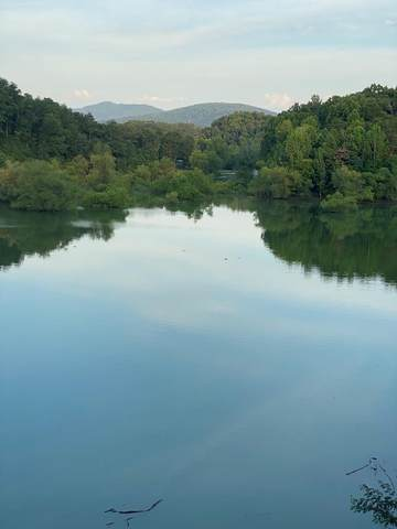 919 Sanctuary Shores Way Lot 6 Timberlak, Sevierville, TN 37876 (#240177) :: Jason White Team | Century 21 Legacy