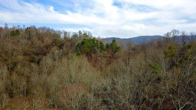 331 Chestnut Ridge, Walland, TN 37886 (#240594) :: Colonial Real Estate