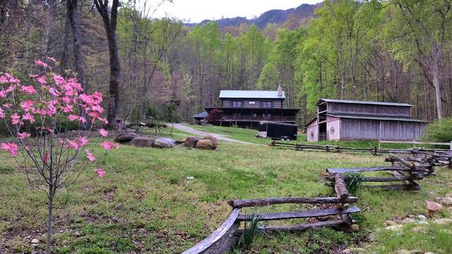 1157 Sugarloaf Mountain Rd, Seymour, TN 37865 (#242451) :: Colonial Real Estate