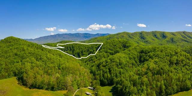Henry Town, Sevierville, TN 37876 (#242784) :: The Terrell-Drager Team