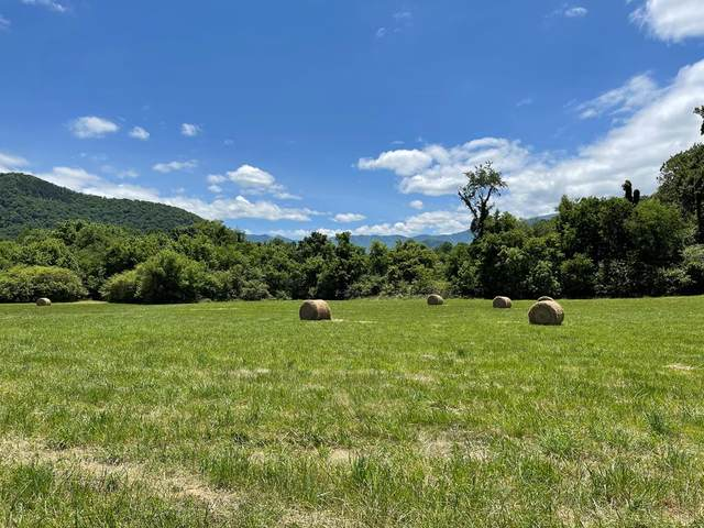 Jones Cove Rd, Cosby, TN 37722 (#243499) :: The Terrell-Drager Team