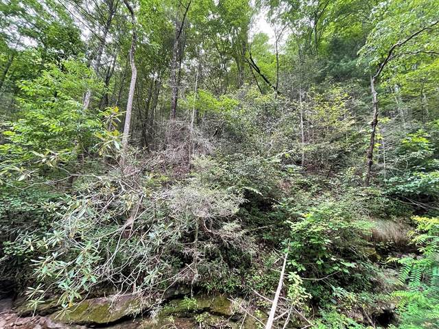 Lot 19 Spicewood St, Sevierville, TN 37876 (#244500) :: The Terrell-Drager Team