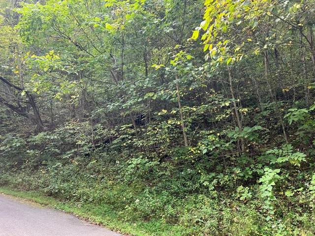 Alpine Dr, Sevierville, TN 37876 (#245366) :: Colonial Real Estate
