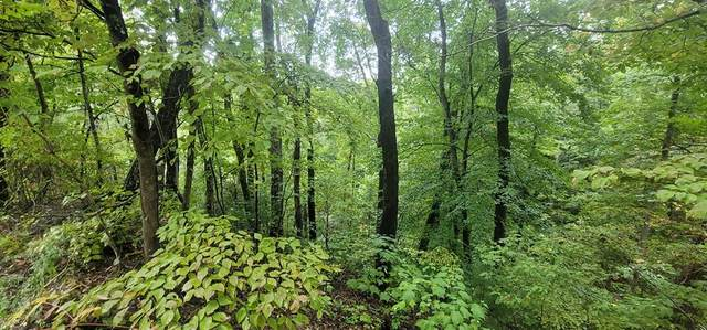 Lot 12B2 Monte Wood Cir, Pigeon Forge, TN 37863 (#245395) :: The Terrell-Drager Team