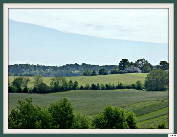 Lot Lot 3 Falcon Rd, White Pine, TN 37890 (#202866) :: Billy Houston Group