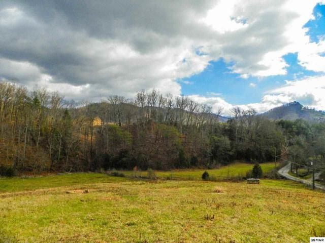 Tract 1 Mccarter Hollow Road Charlene M. Lea, Sevierville, TN 37862 (#207756) :: Billy Houston Group