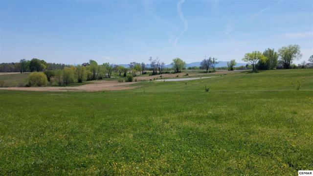 Lot 110 Wild Pear Trail, Dandridge, TN 37725 (#215455) :: Four Seasons Realty, Inc