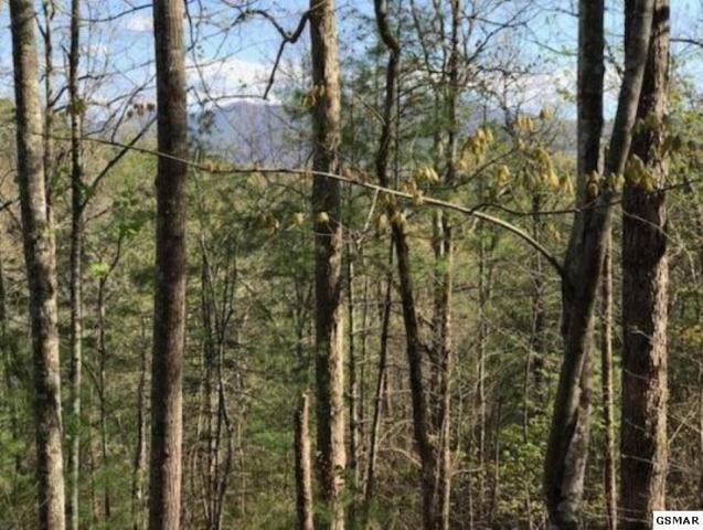 456 Mt. John Loop Rd., Townsend, TN 37882 (#219310) :: Billy Houston Group