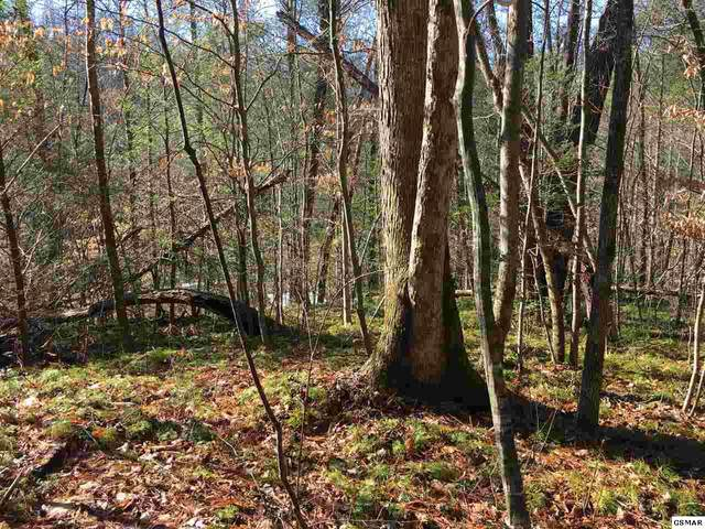 lot 43 Catons Grove Rd, Cosby, TN 37722 (#225766) :: Four Seasons Realty, Inc