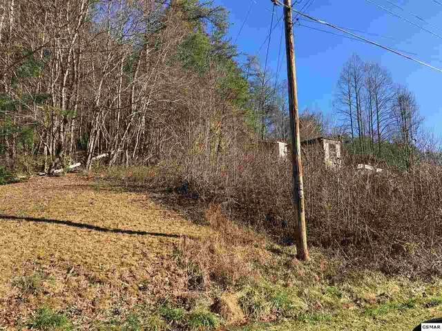 Lot Lot 46 Catons Grove, Cosby, TN 37722 (#225767) :: Four Seasons Realty, Inc